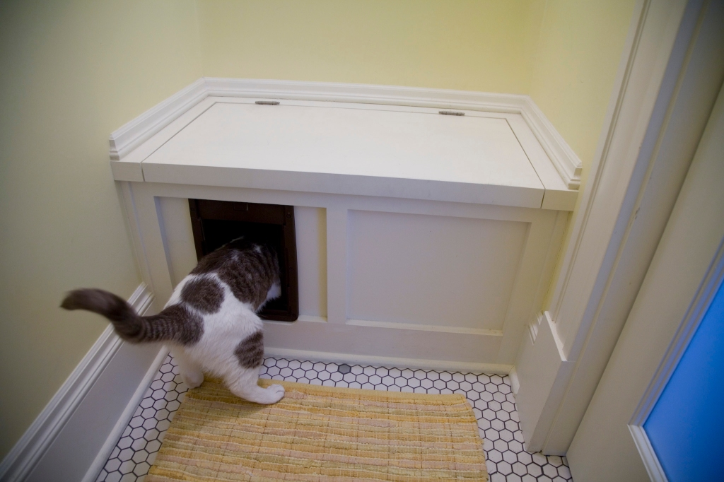 MillsHuff_Best_CatBox_6